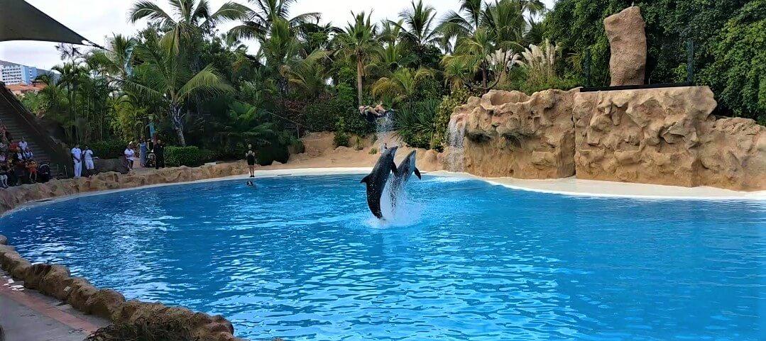 Dolphin Show in Loro Park