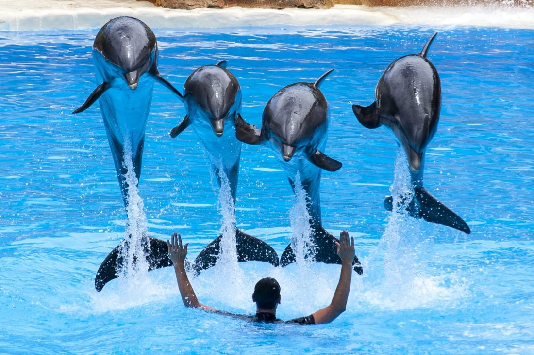 Dolphins Show in Loro Park