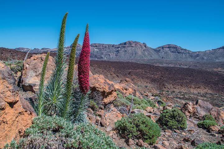 Teide landscape