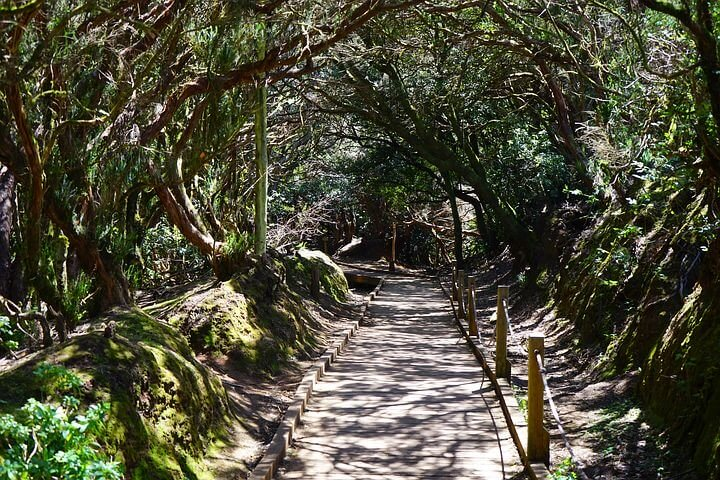 Hike way in Anaga Rural Park