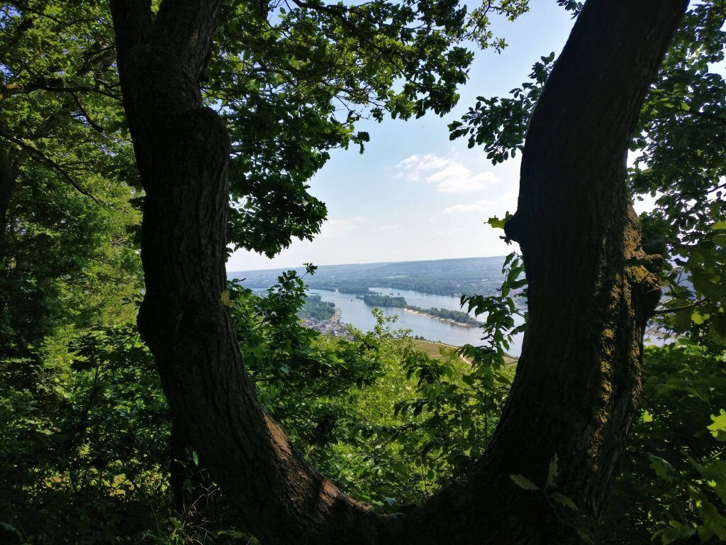 Viewpoint in Niederwald Landscape park, Rudesheim am Main, Rhine Valley